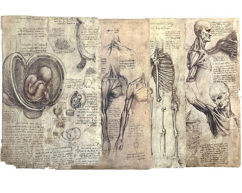 2disegni-di-anatomia