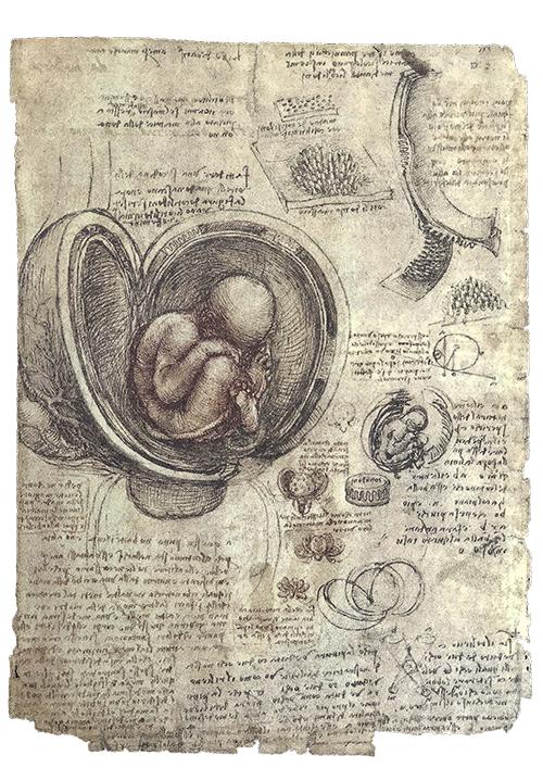 anatomia-embriologia