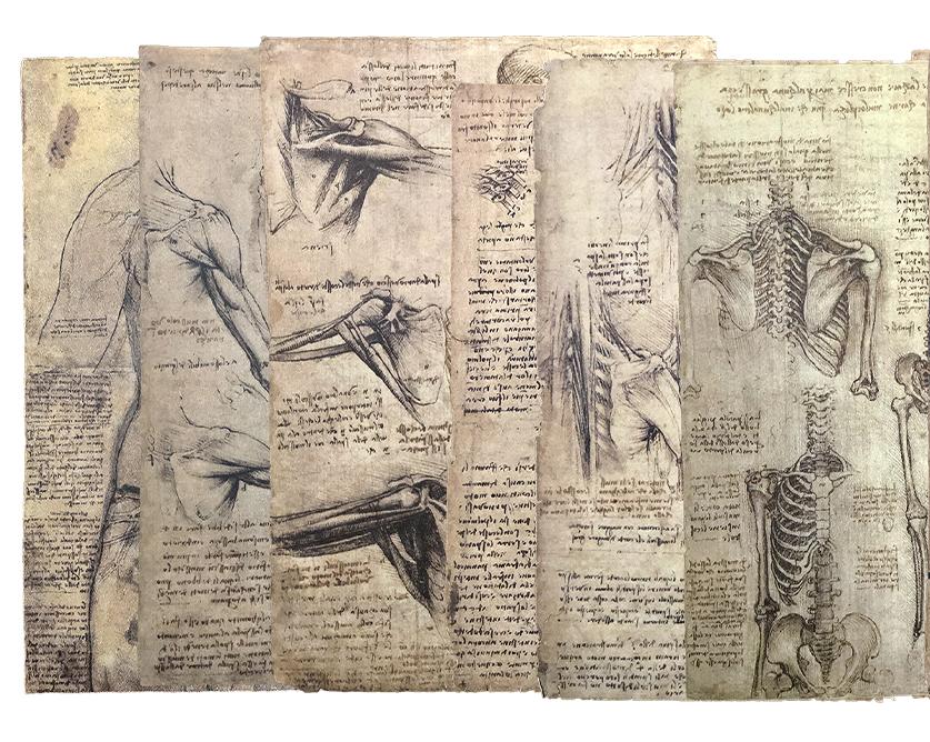 disegni-di-anatomia-2